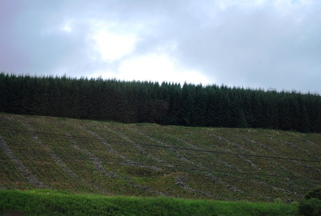 Clear felled forest