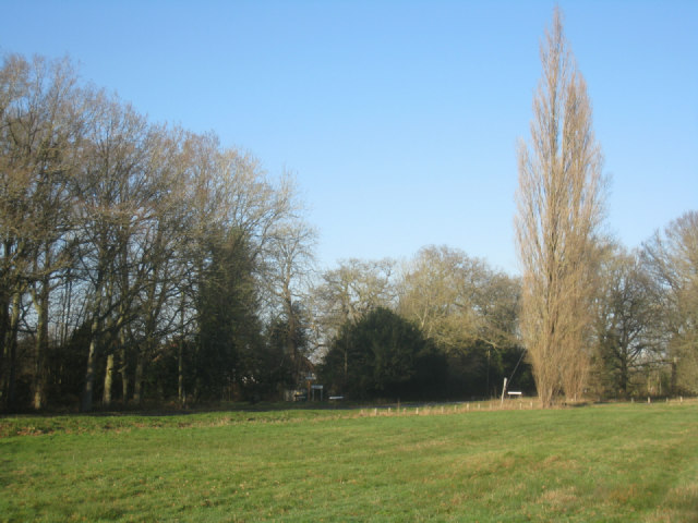 Odiham Common near Whitehall
