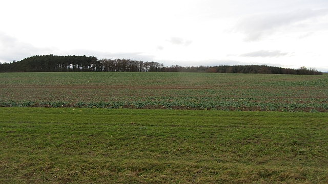 Arable land, Ancroft