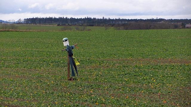 Scarecrow, Berrington Law