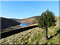 SK0688 : Lone holly bush, Kinder Reservoir by Peter Barr