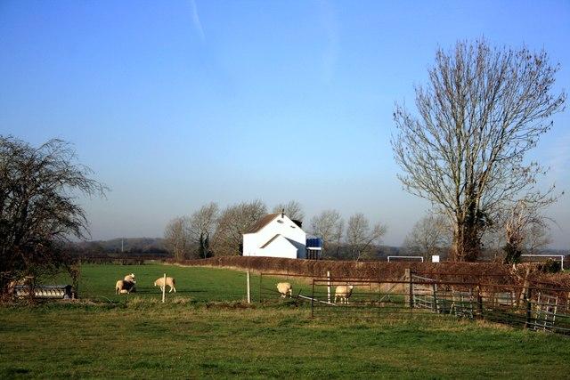 Sheep and Pavilion