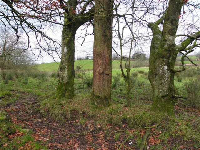 Wooded area, Beltany School