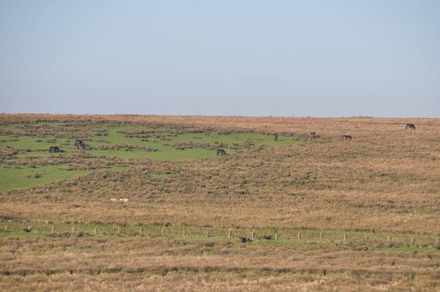 Exmoor : Moorland & Exmoor Ponies