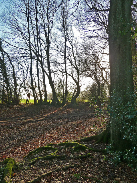 Roots and Branches, Pavis Wood