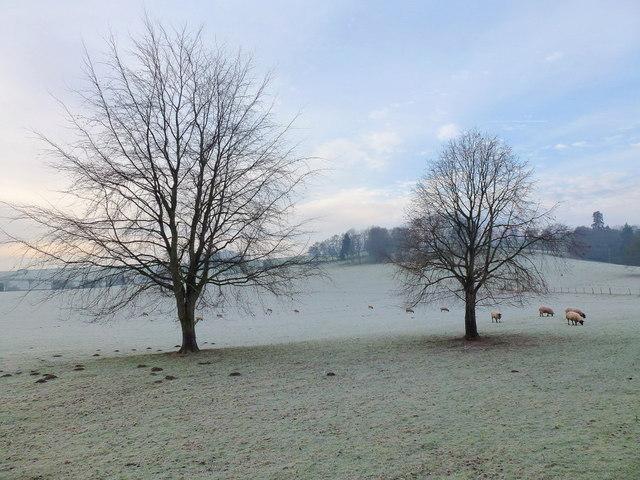 Parkland grazing
