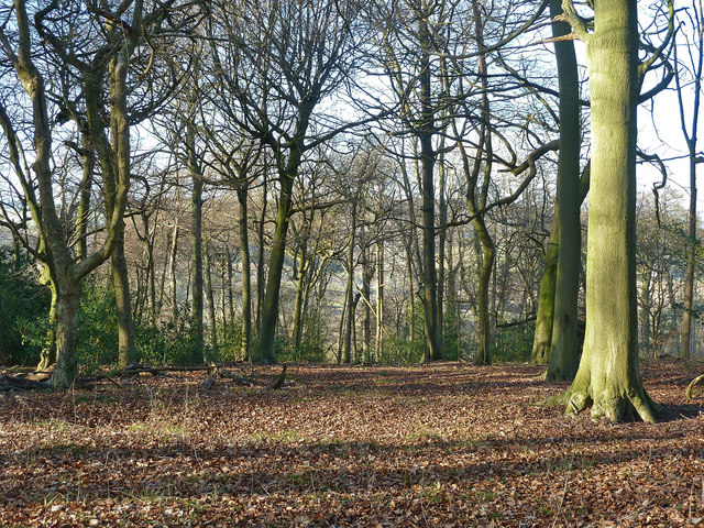 Pavis Wood looking northwestwards