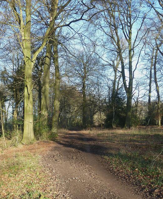 The Ridgeway through Pavis Wood