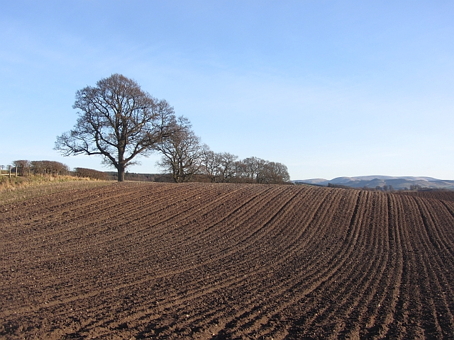 A ploughed field