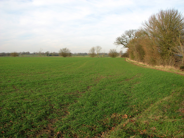 Field boundary hedge by Red House Farm