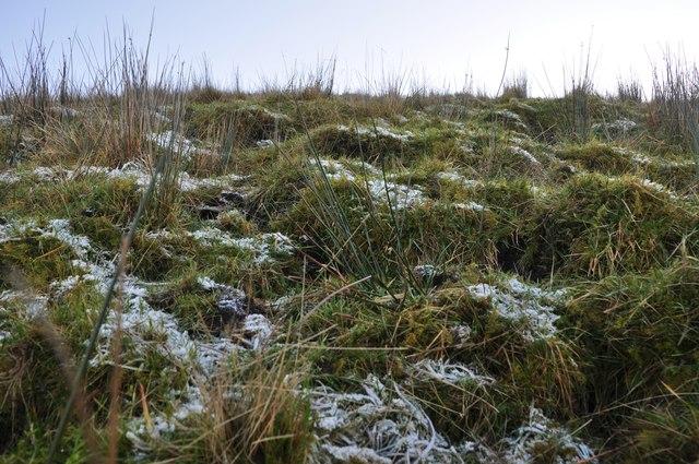Exmoor : Moorland Grass