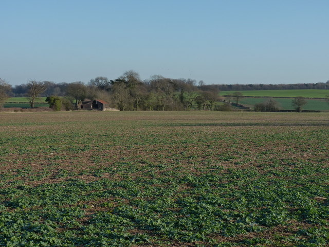 Winter crops and a shabby barn