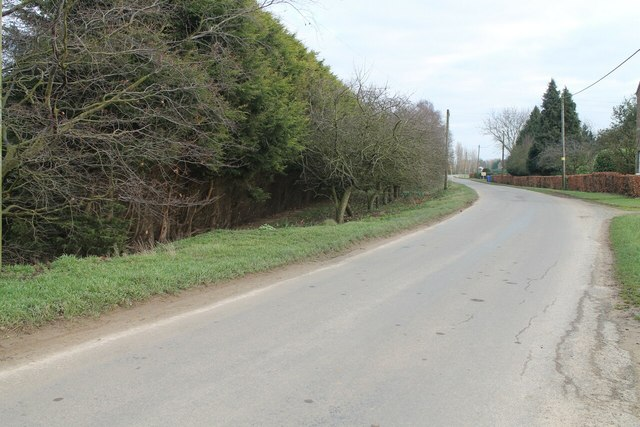 Apple Trees along Kirton Holme road