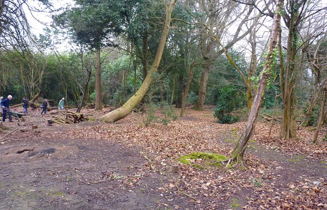 Rothesay Woods, Highcliffe