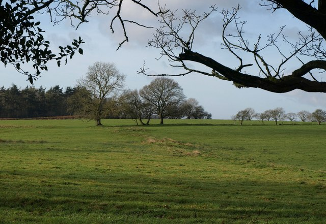 Old field boundaries, Ashridge Moor
