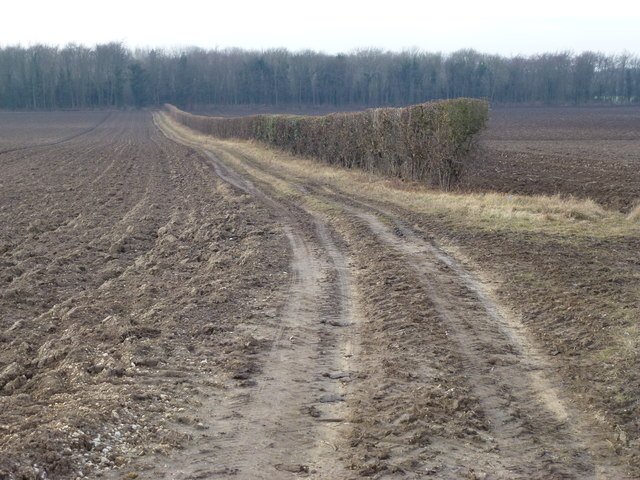 Track to Southern's Plantation near Hillington, Norfolk