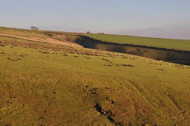 Exmoor : Sheep on the Moorland