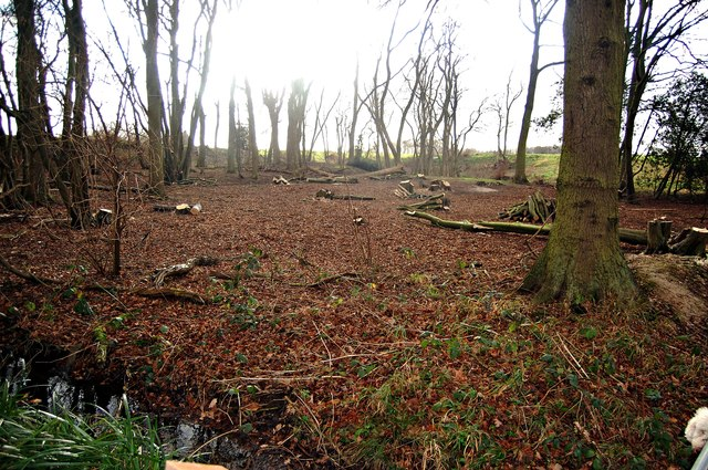 Coppicing in The Wilderness