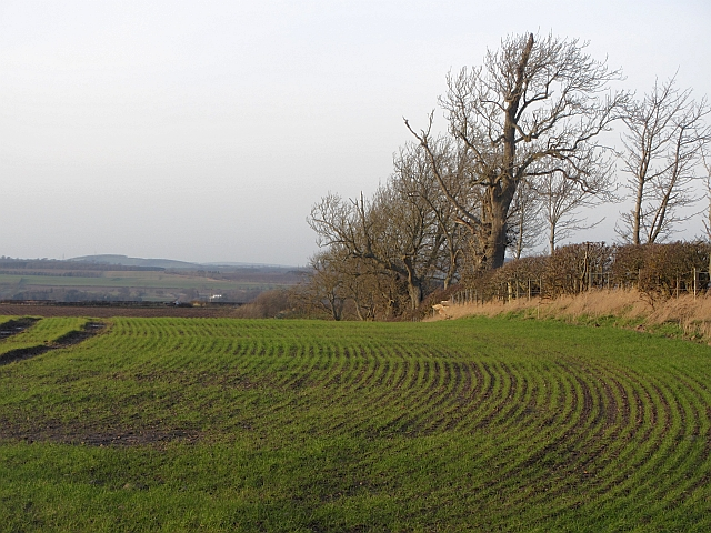 Arable land, Heiton