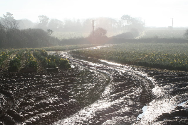 A misty morning and a muddy field