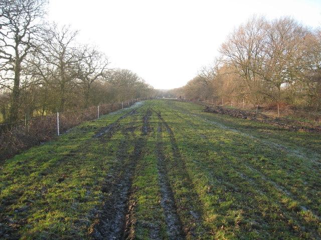 Long narrow field