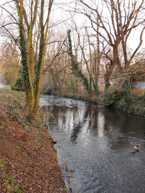 The River Crane, Crane Park, January
