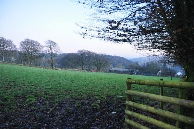 Exmoor : Field near Simonsbath