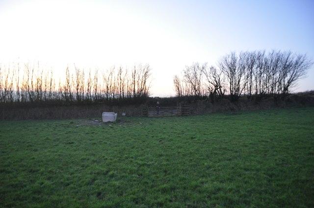 Exmoor : Grassy Field