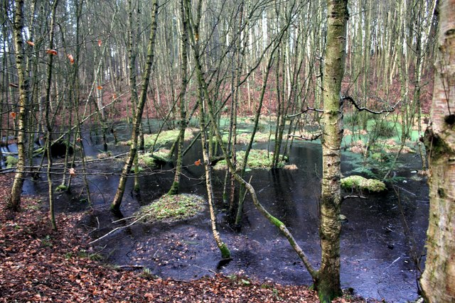 Pond in Delamere Forest