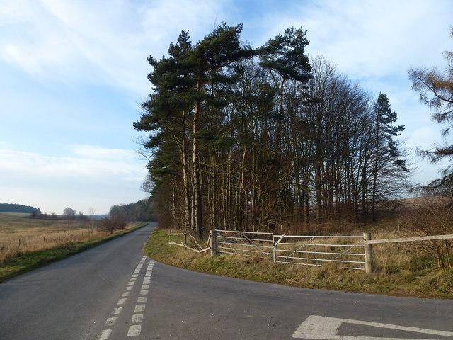 Trees on Massingham Road