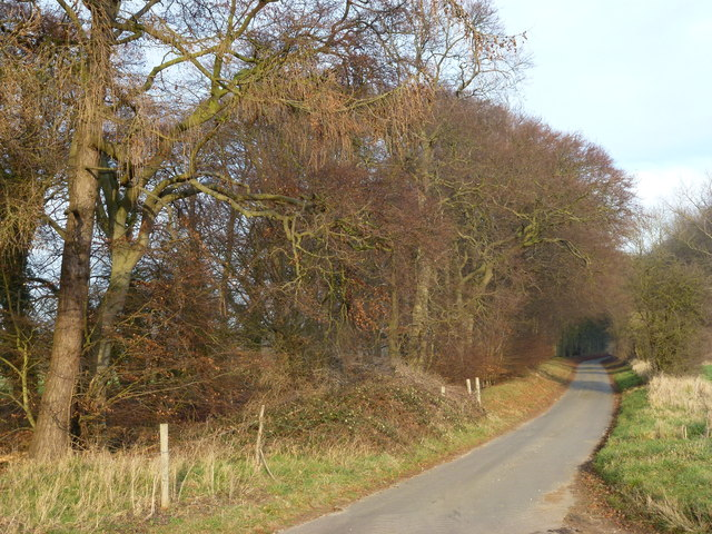 Country lane to Little Massingham, Norfolk