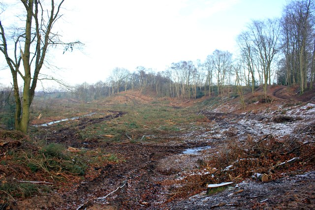 Clearance in Delamere Forest