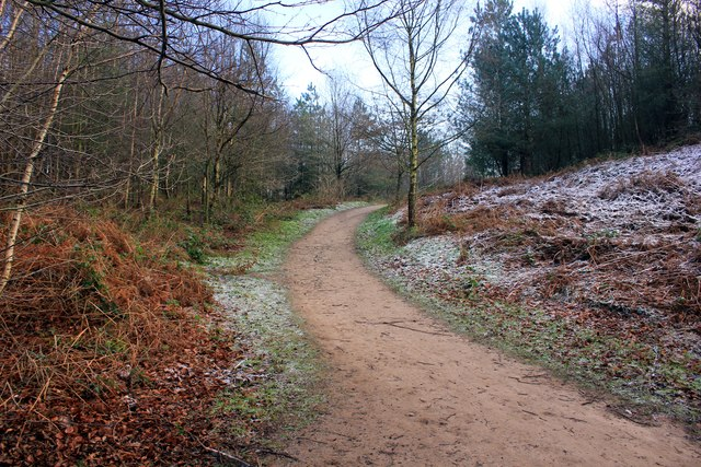 The Delamere Way in Delamere Forest