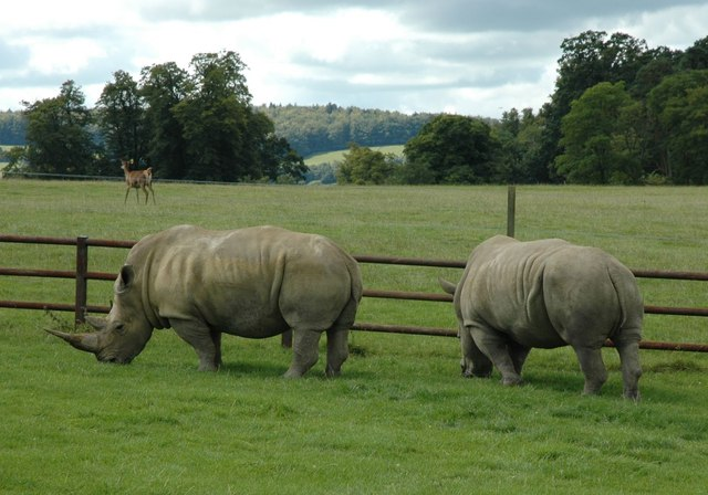 Longleat Safari Park - Rhino
