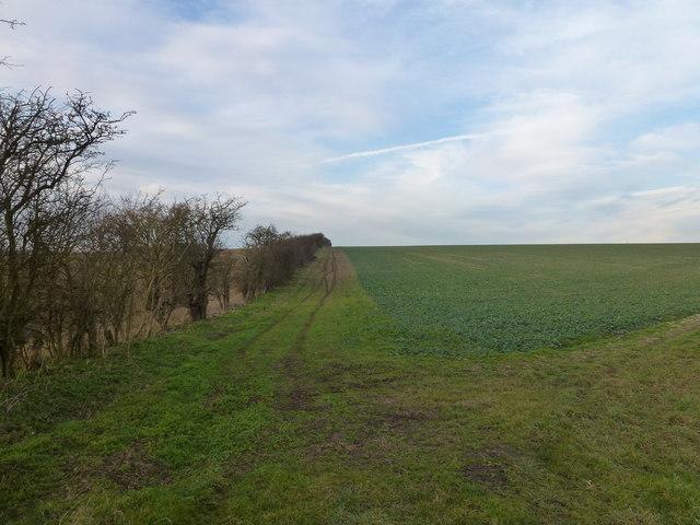Farmland on Massingham Heath