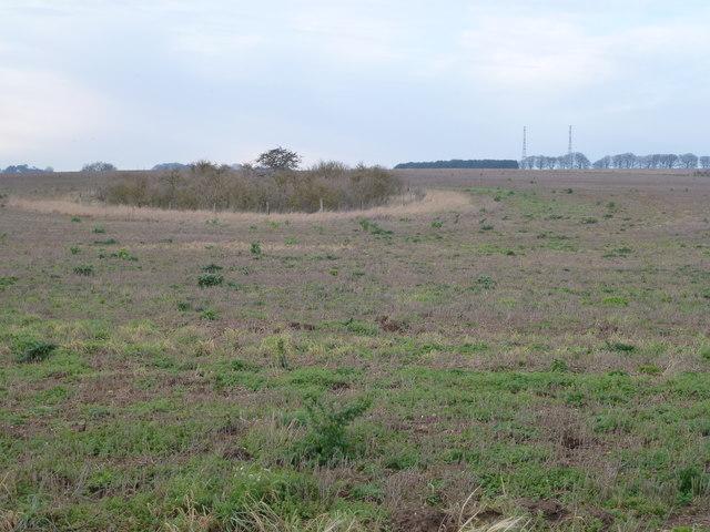 Marl pit on Massingham Heath