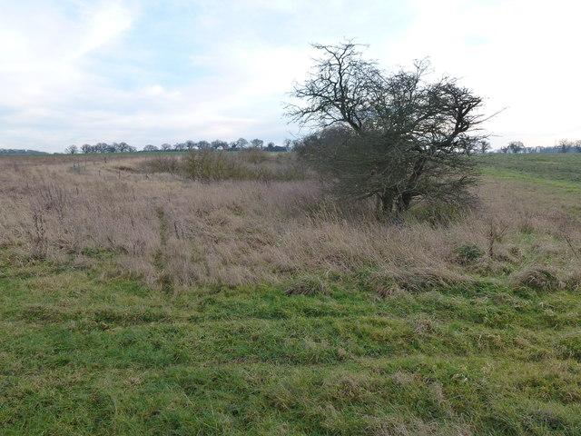 Overgrown marl pit on Massingham Heath