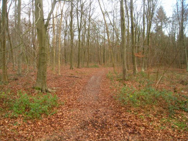 Path in Black Wood
