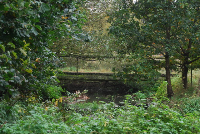 Footbridge in the trees