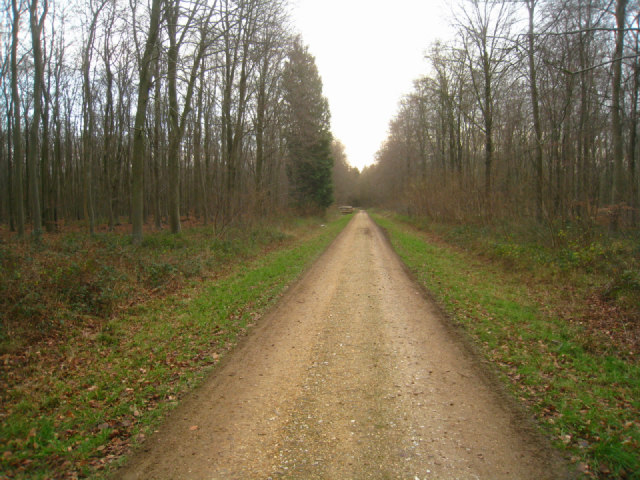 Access track - Black Wood