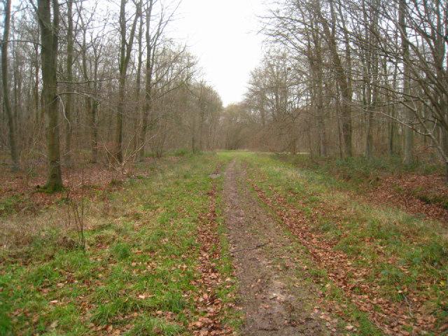 Minor track - Black Wood