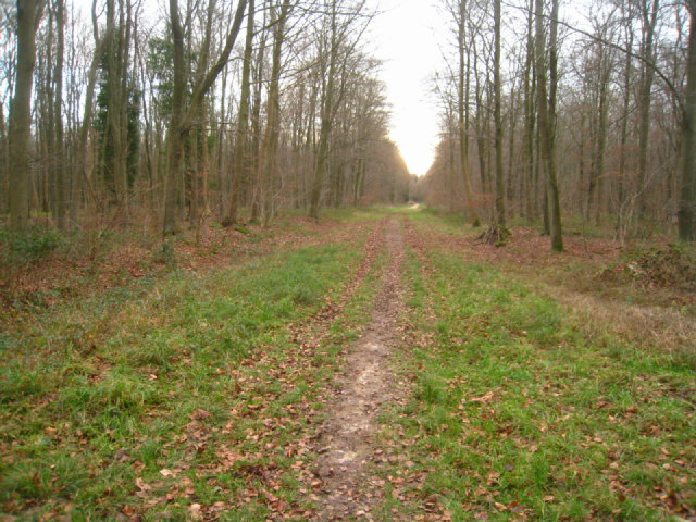 Path through Black Wood