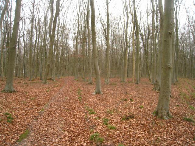 Small path - Black Wood