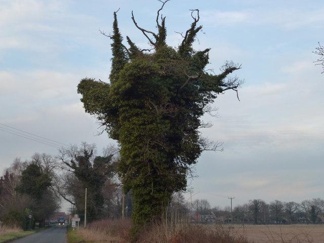 Life after death in Gayton, Norfolk