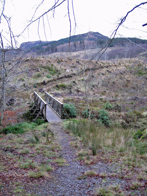 Footbridge in Lochalsh Woodland Park
