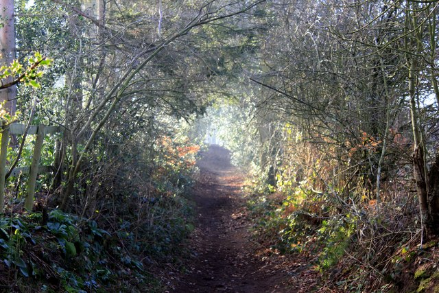 The Delamere Loop near Hart Hill