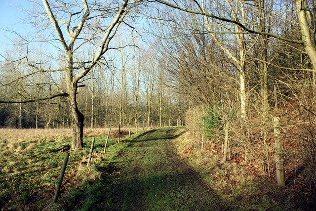 Track near Harthill Bank