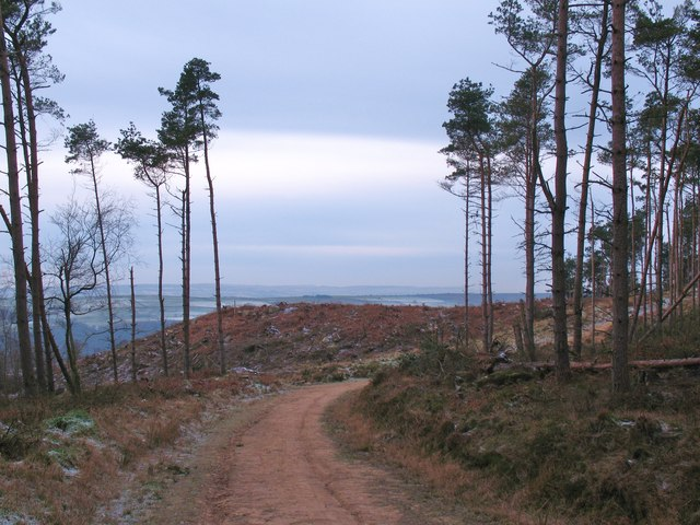 Forest track, Norwood Edge