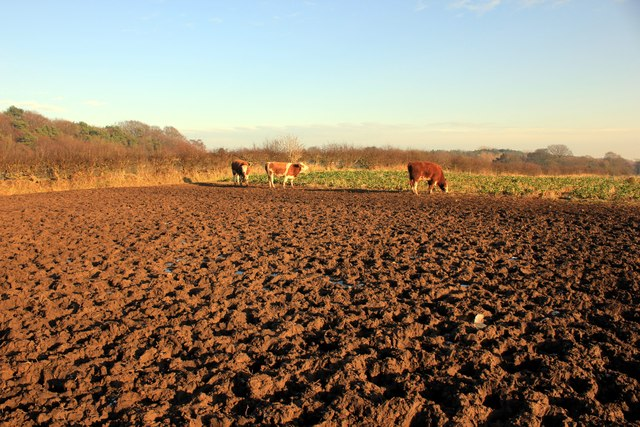 Field on the Delamere Way