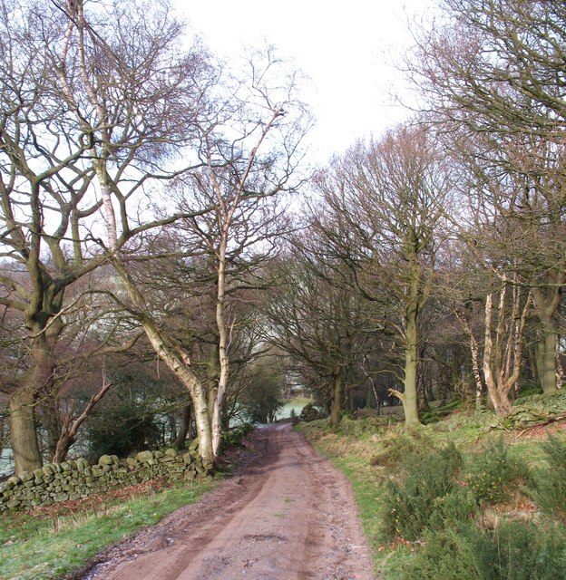 Track and bridleway, Norwood